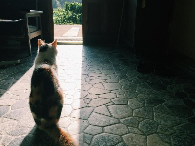 ペットがいる場合の終活 飼い主の万が一への備えのイメージ画像